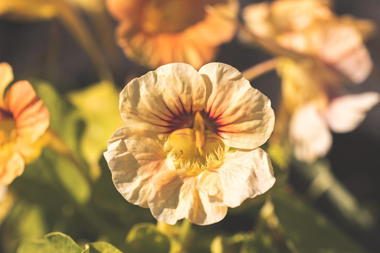 Фотография Размытый фон Цветы вблизи боке цветок Крупным планом