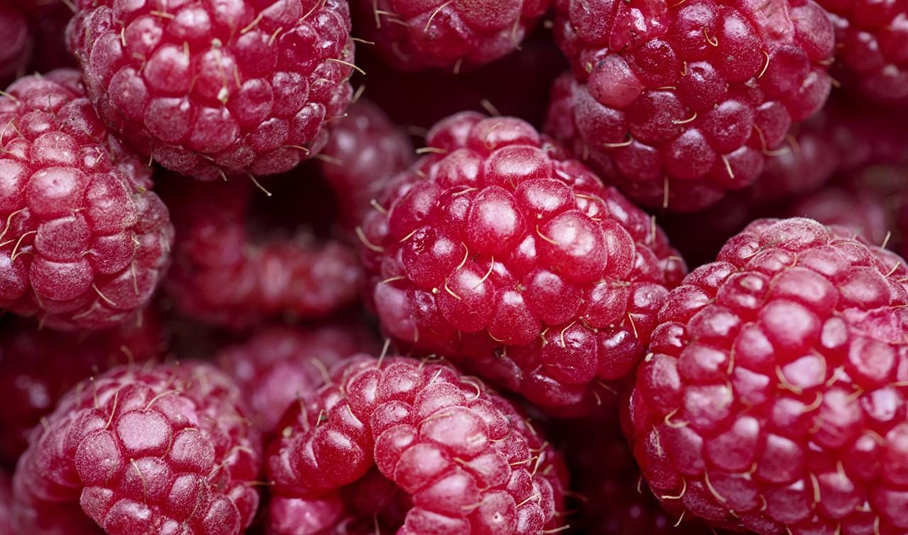 Фотография красная Малина Еда Ягоды Крупным планом Красный красные красных Пища Продукты питания вблизи