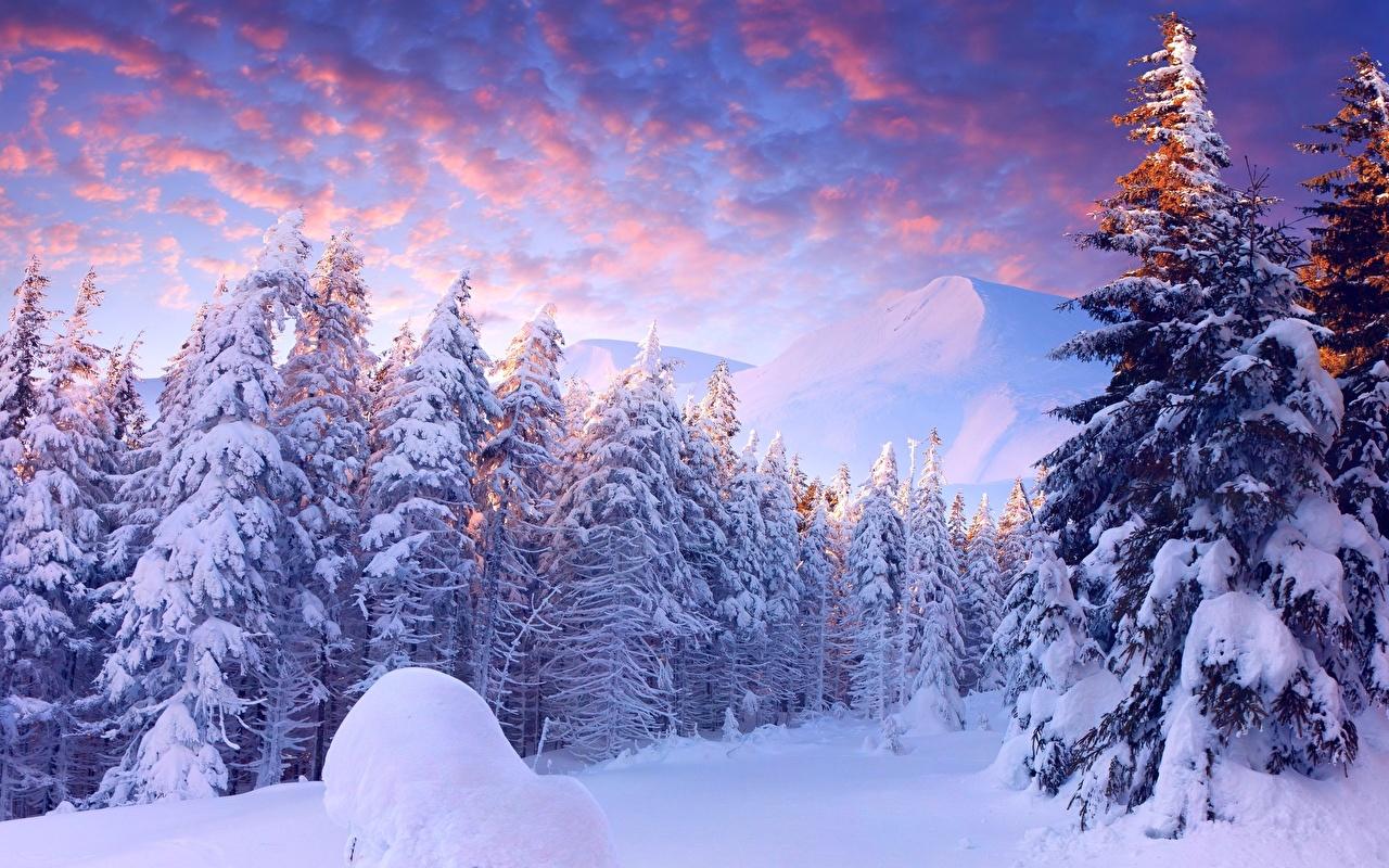 """Картинки по запросу """"фото зимы в лесу"""""""