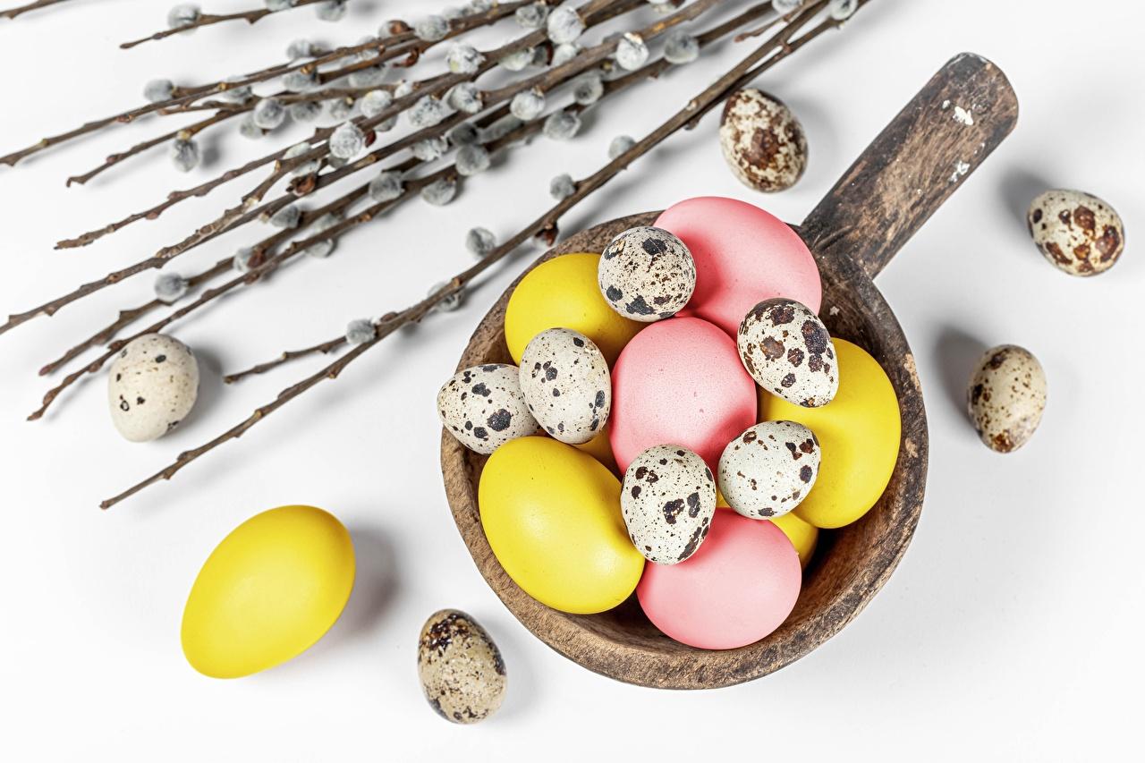 Фото Пасха ВЕРБА яиц ветвь белом фоне яйцо Яйца яйцами Ветки ветка на ветке Белый фон белым фоном