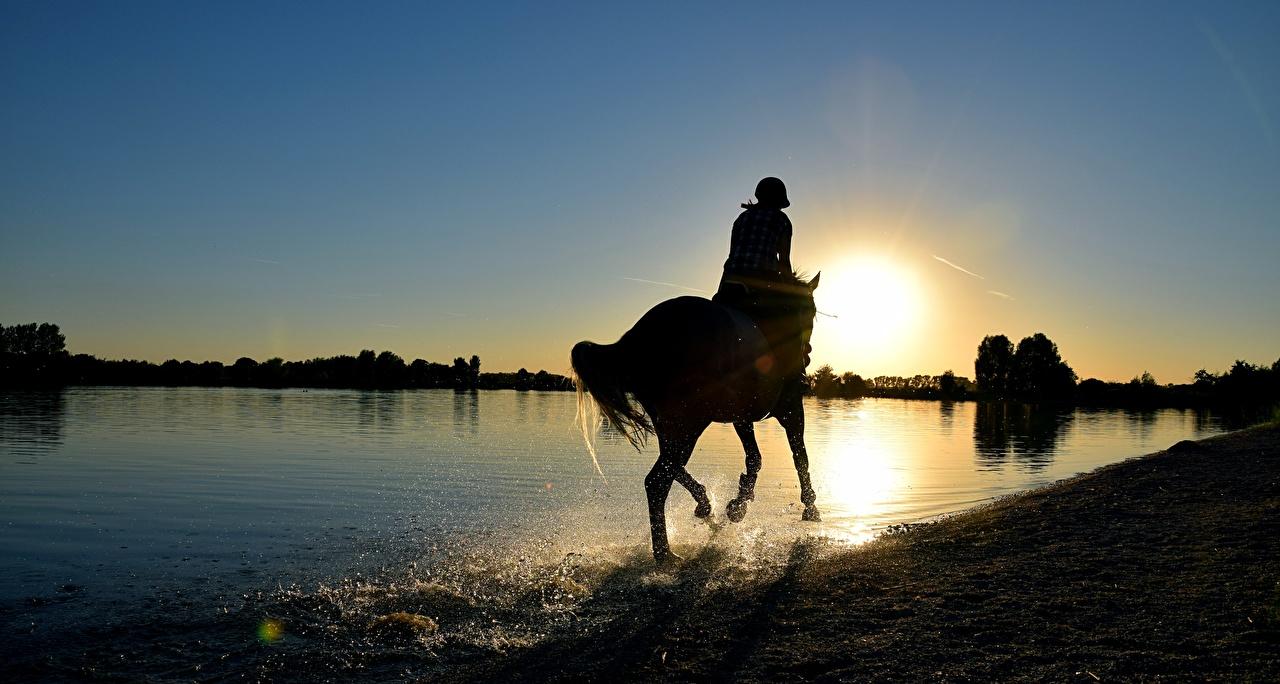 Фото лошадь силуэты Озеро Брызги рассвет и закат Животные Лошади Силуэт силуэта с брызгами Рассветы и закаты животное