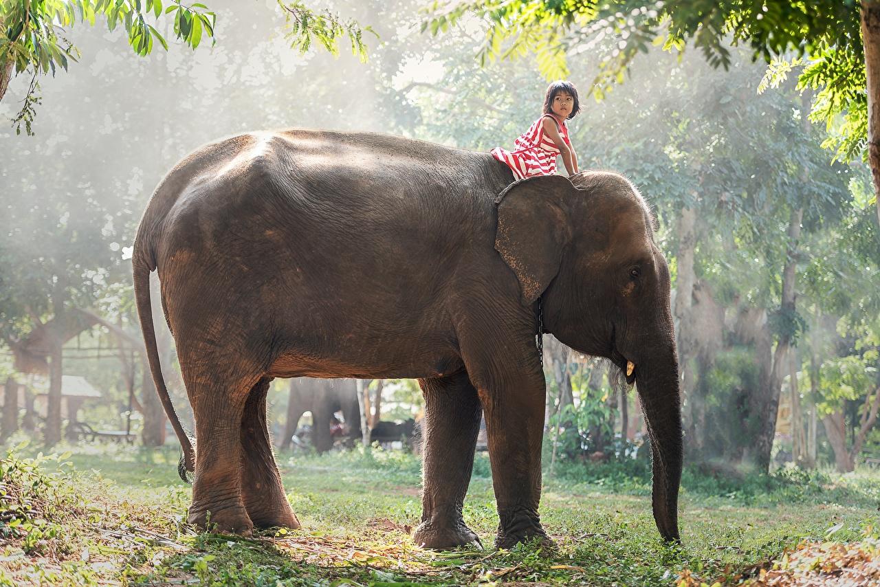Фотография девочка Слоны Азиаты Животные Девочки