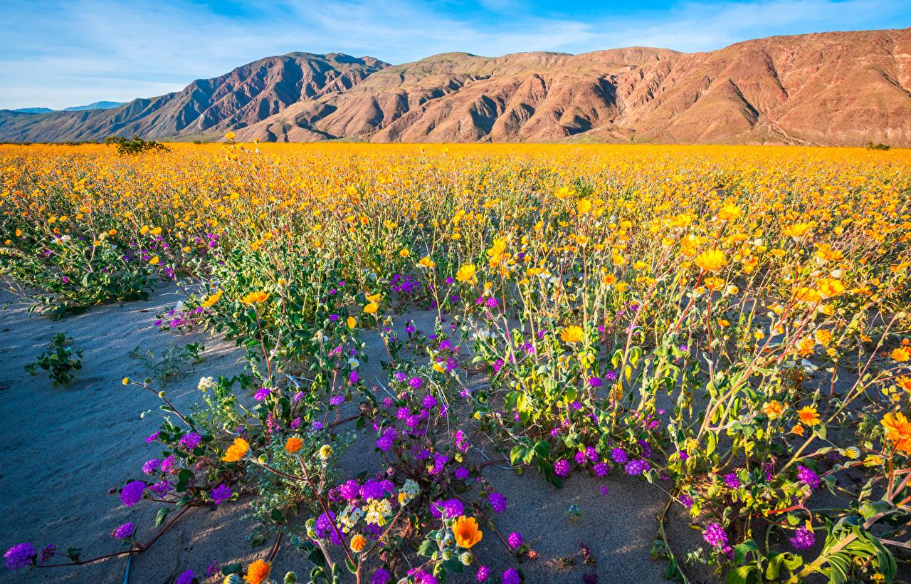 Фотографии калифорнии америка Anza-Borrego Desert State Park гора Природа Парки Калифорния США штаты Горы парк