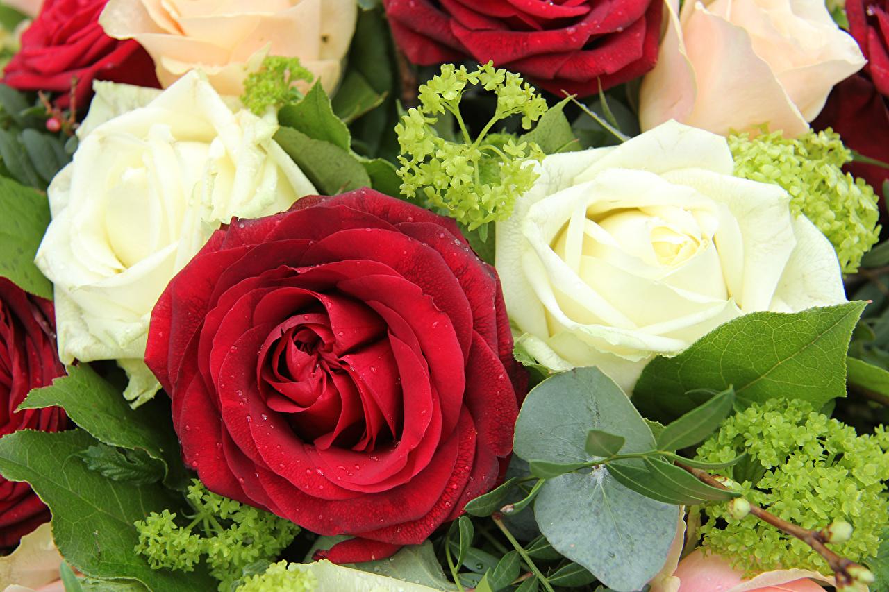 Обои для рабочего стола букеты роз