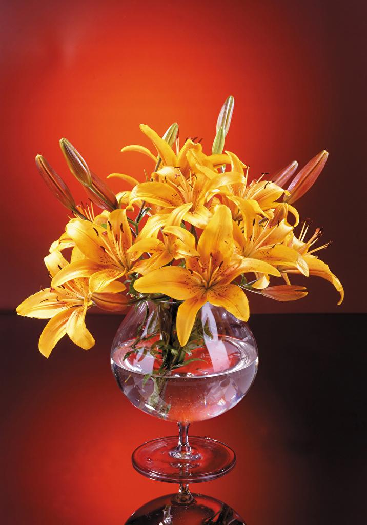 Картинка Лилии Желтый Цветы Ваза Бутон