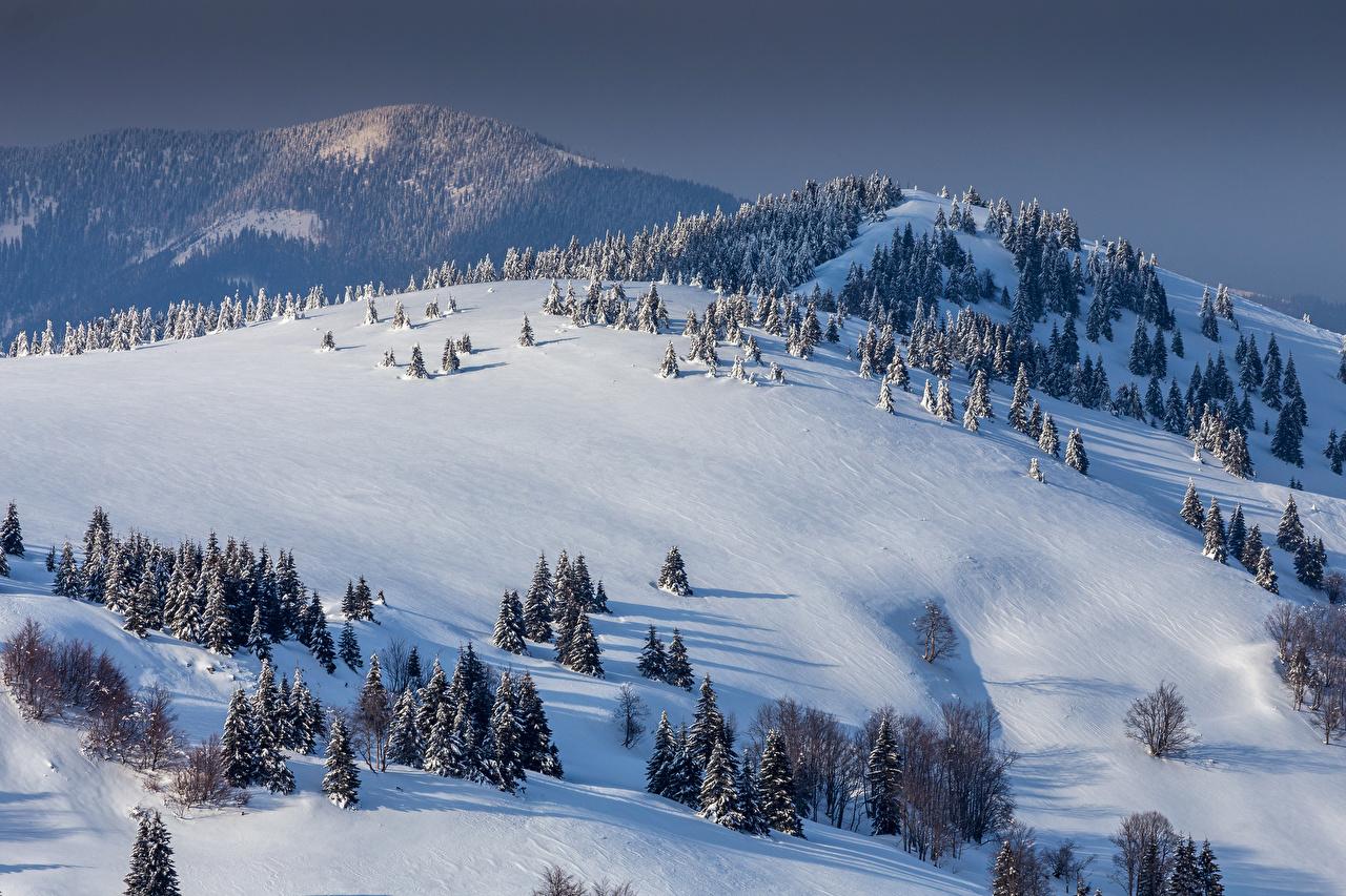 Обои Словакия Donovaly Ель Зима Горы Природа Снег Холмы зимние