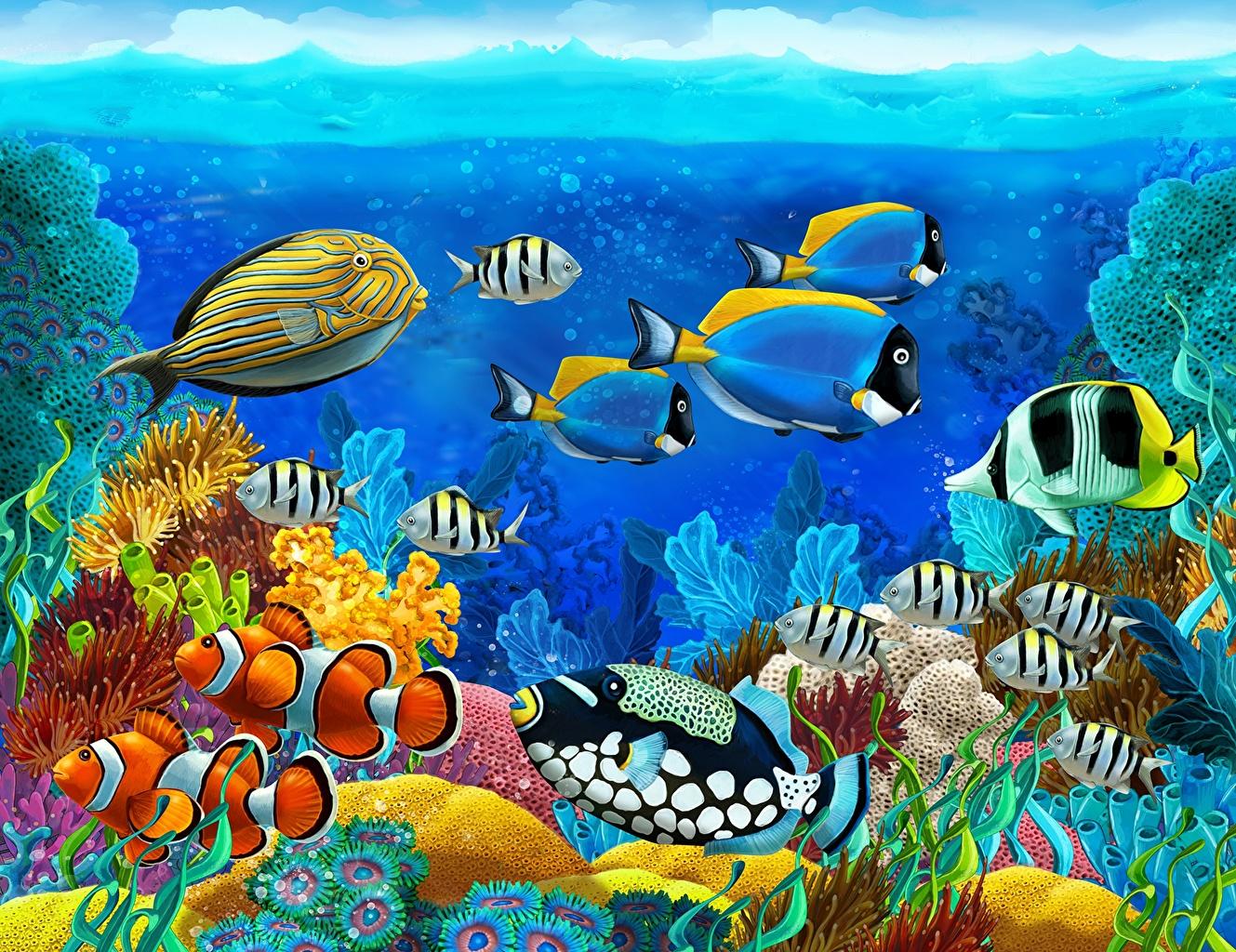 Фотографии Рыбы Подводный мир Животные животное