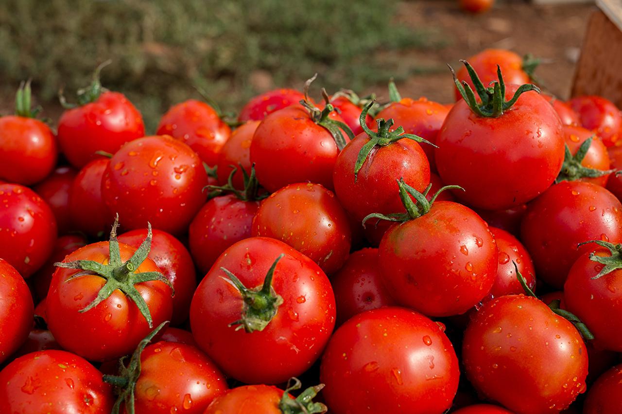 Фото Красный Помидоры Пища Овощи Много Томаты красная красные красных Еда Продукты питания