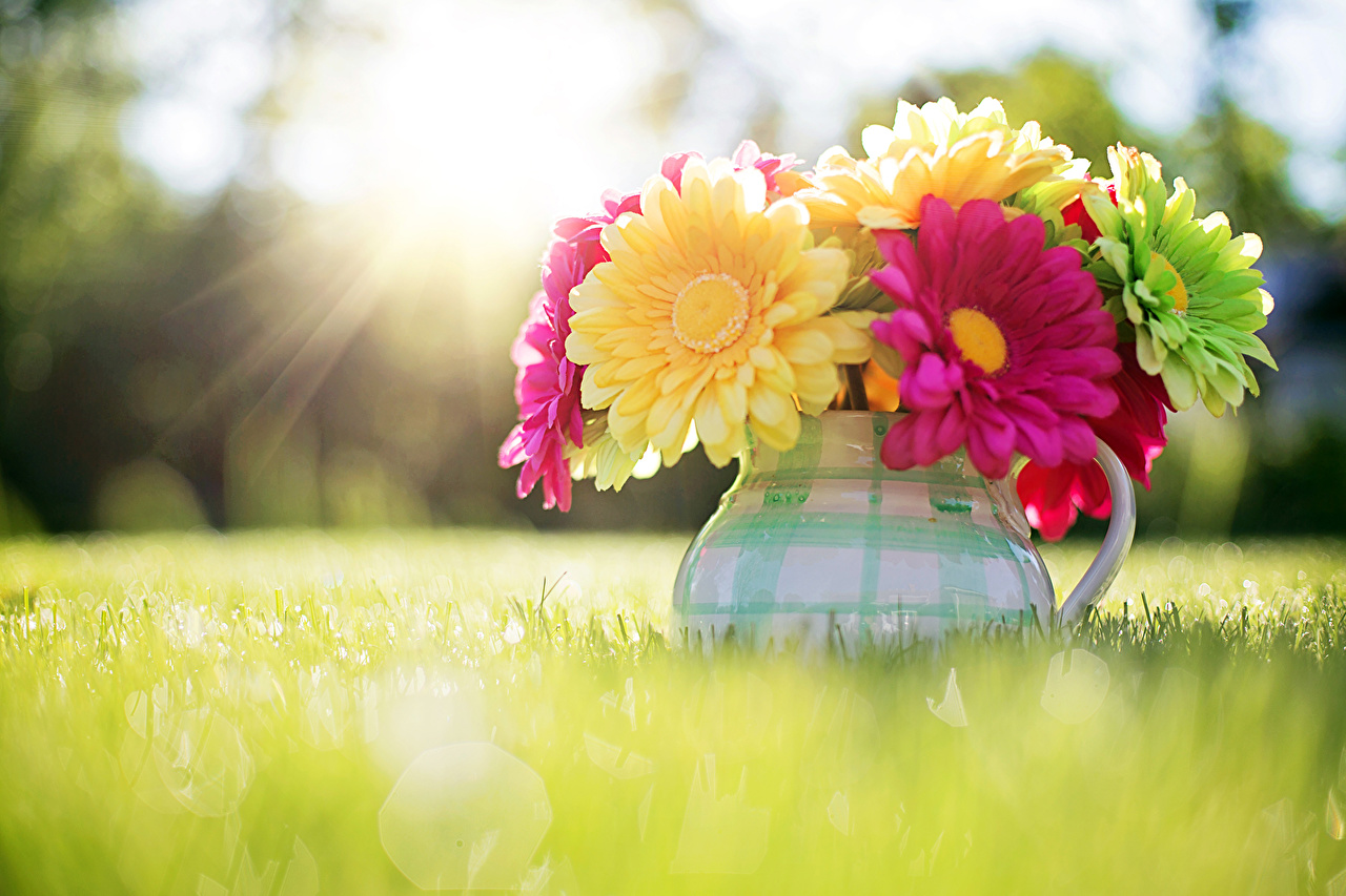 Фото гербера Цветы вазы Трава Герберы цветок Ваза вазе траве