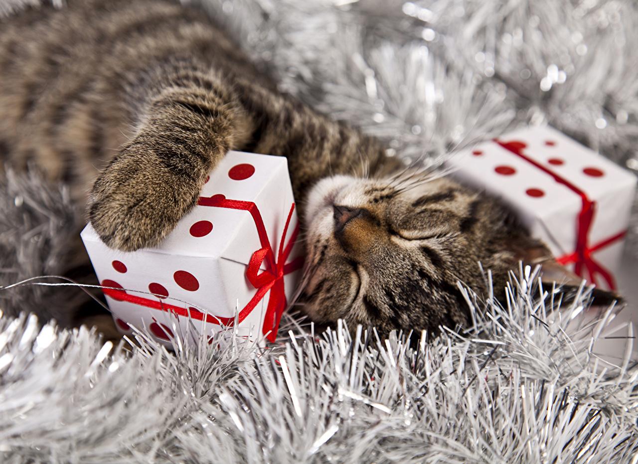 Кошки Новый год Подарки Спит Кубик Рождество, Коты, спящий, сон, Куб Животные