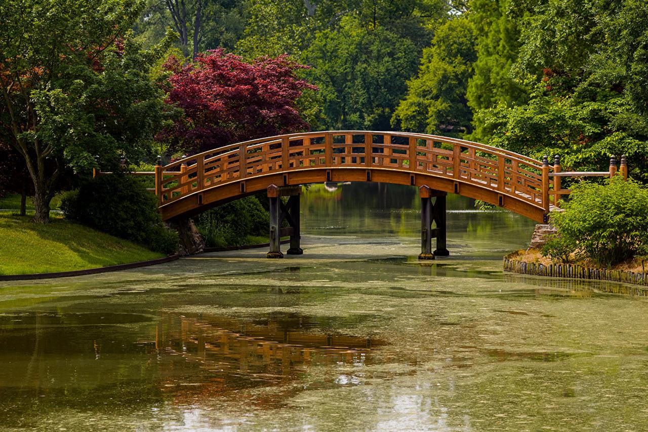 Картинки штаты Missouri Botanical Garden Мосты Природа Пруд парк США америка мост Парки