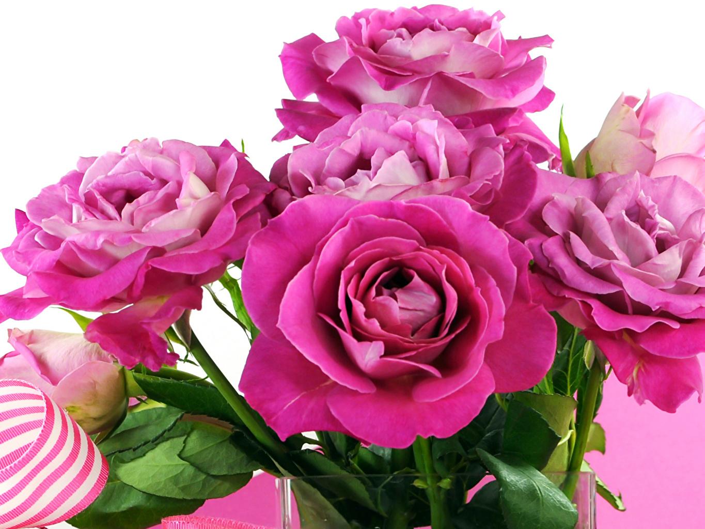 Фотография Розы Розовый Цветы Крупным планом роза розовая розовые розовых цветок вблизи
