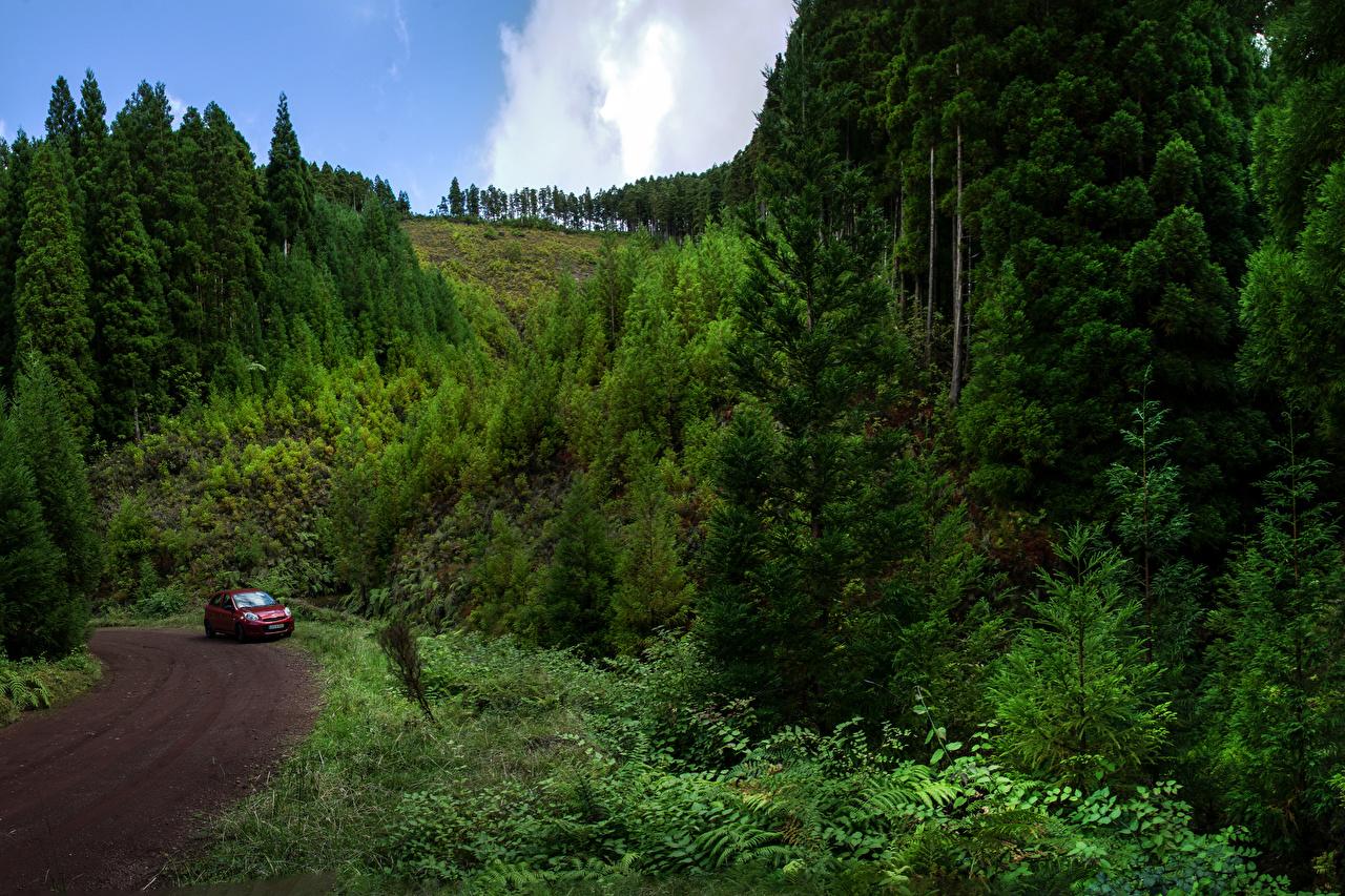 Картинки Португалия Sao Miguel Azores Природа Леса Дороги лес