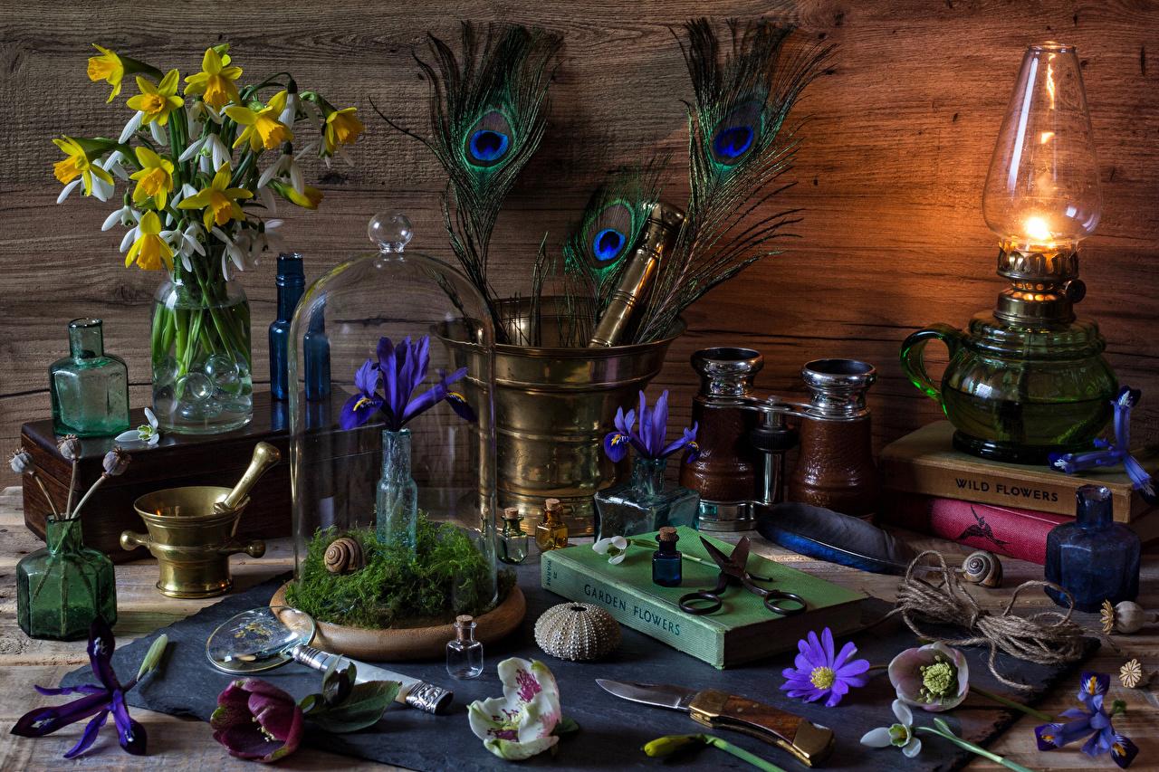 Фотография Керосиновая лампа ирис Цветы Нарциссы Подснежники книги Натюрморт Ирисы цветок Галантус Книга