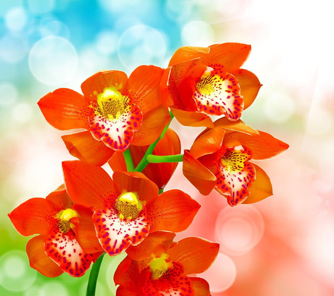 Фото красные Орхидеи Цветы Крупным планом красных Красный красная вблизи