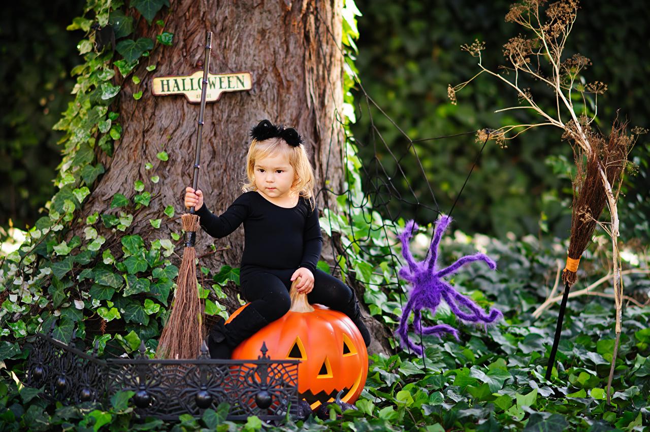 Фотографии Девочки Пауки Дети Тыква Хеллоуин сидящие девочка ребёнок хэллоуин сидя Сидит
