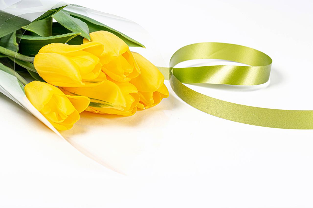 Фотография желтых тюльпан цветок Лента белом фоне желтые желтая Желтый Тюльпаны Цветы ленточка Белый фон белым фоном
