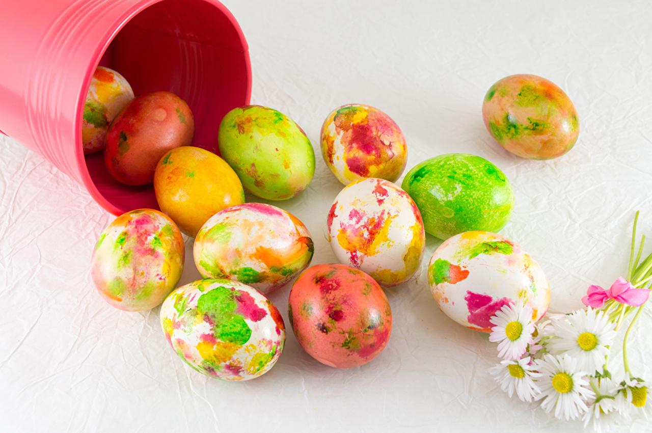 Фотография Пасха Яйца Ромашки Серый фон Праздники дизайна яиц яйцо яйцами ромашка сером фоне Дизайн