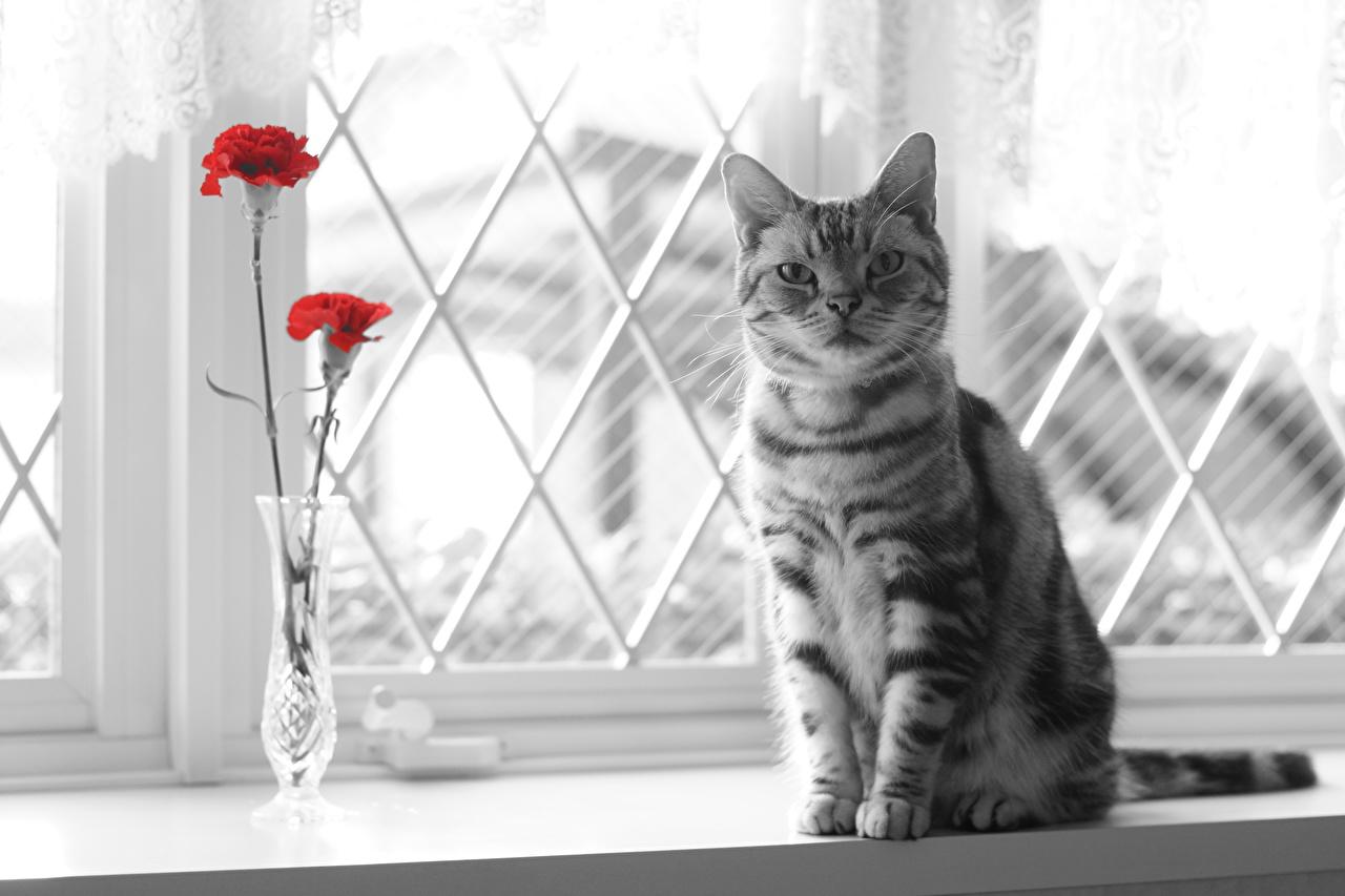 Картинки Коты Окно смотрит Животные Кошки Взгляд