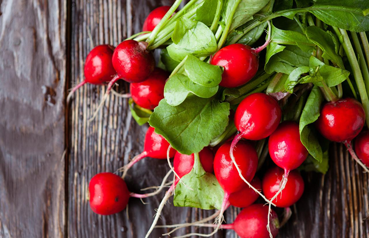 Фотография Редис красные Еда Овощи красная Красный красных Пища Продукты питания