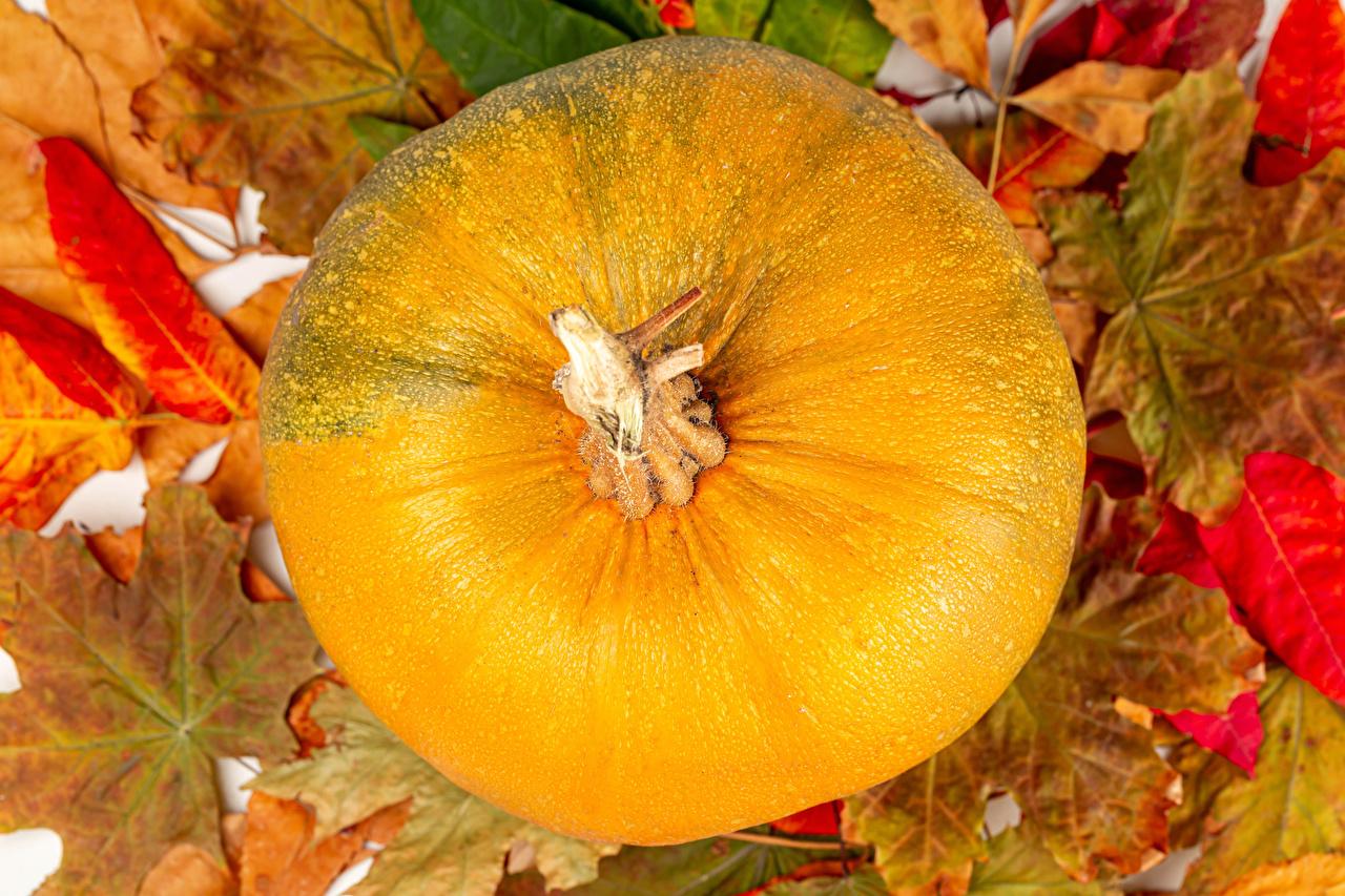 Картинки лист Осень Тыква Природа Листва Листья осенние