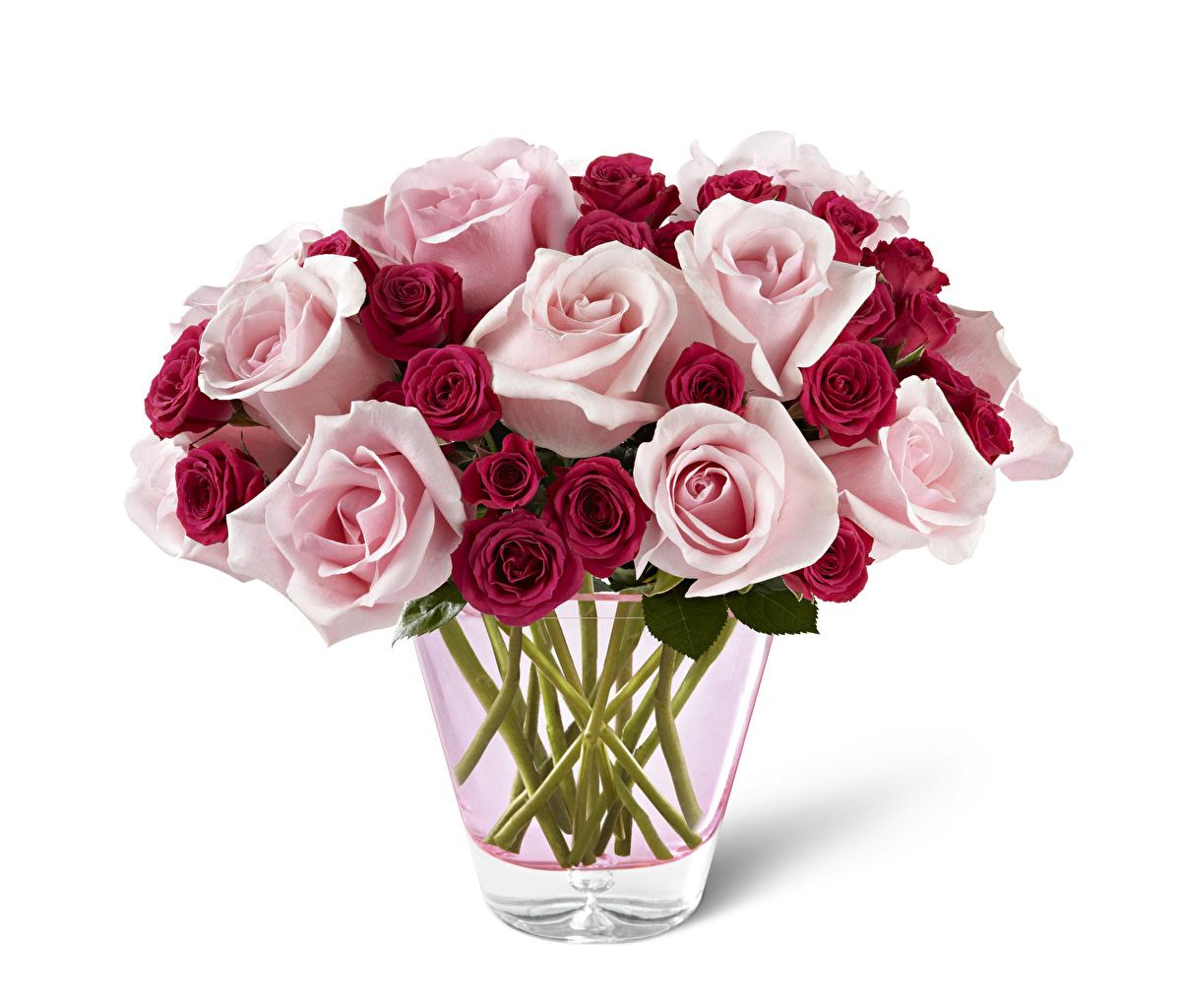 Картинка роза Цветы вазы Белый фон Розы цветок Ваза вазе белом фоне белым фоном