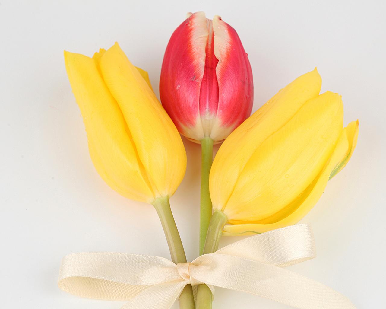 Фото Тюльпаны цветок Трое 3 Бантик сером фоне Крупным планом тюльпан Цветы три бант втроем бантики вблизи Серый фон