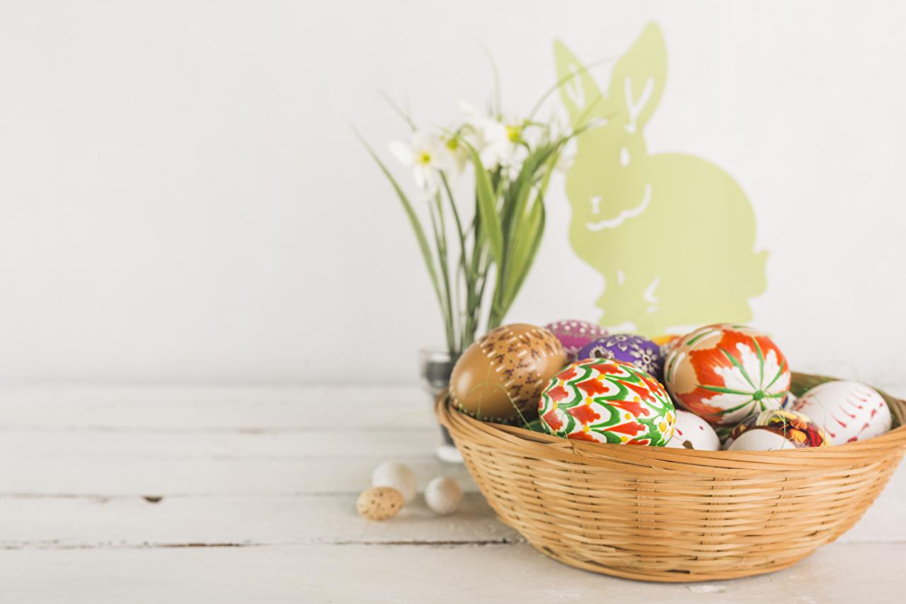 Фотография Пасха Кролики Нарциссы Праздники кролик