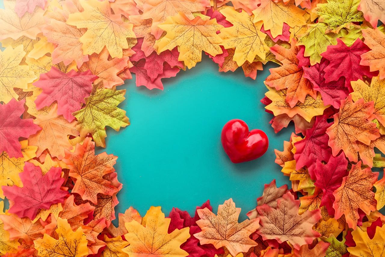 Картинки Листья серце клёна Природа лист Листва Сердце сердца сердечко Клён клёновый