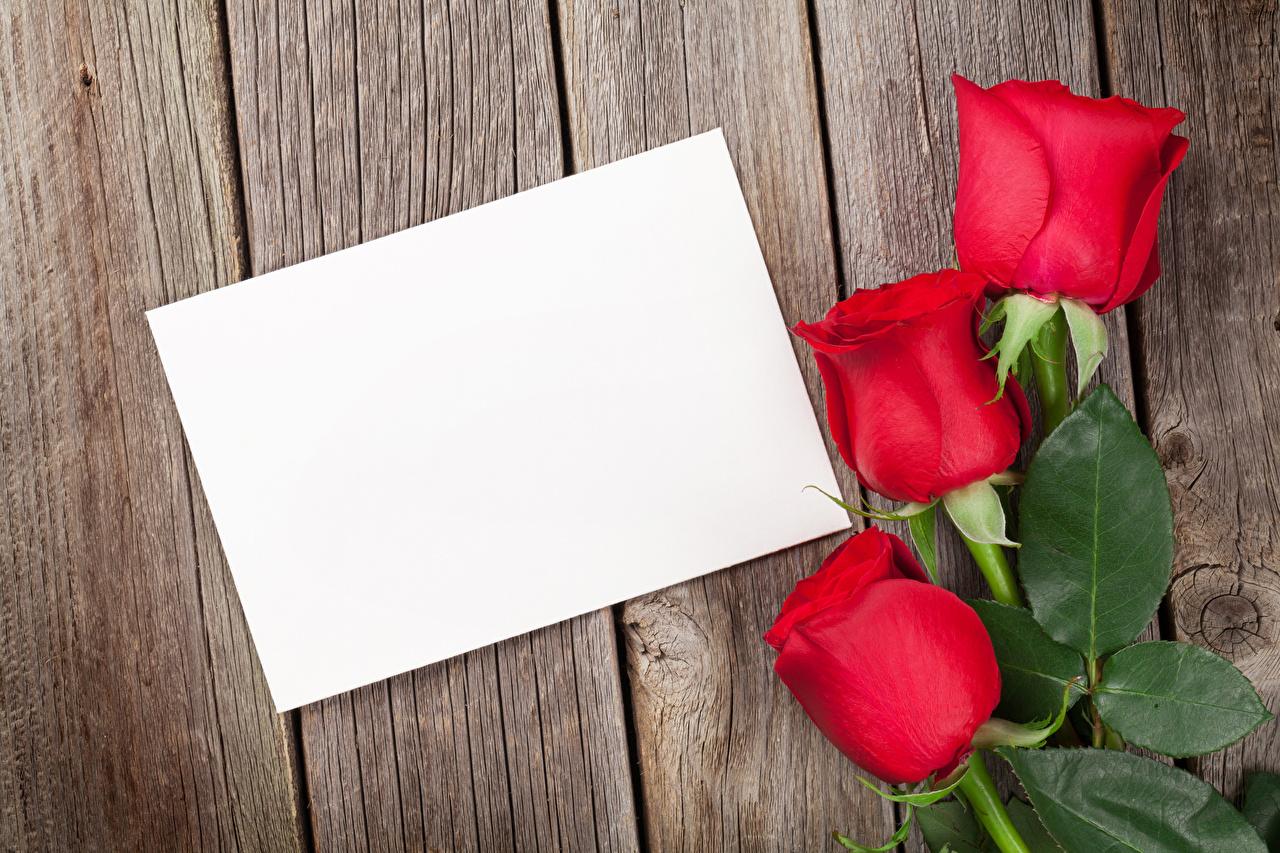 Фотография День святого Валентина Розы Красный Цветы Шаблон поздравительной открытки Доски День всех влюблённых роза красных красная красные цветок