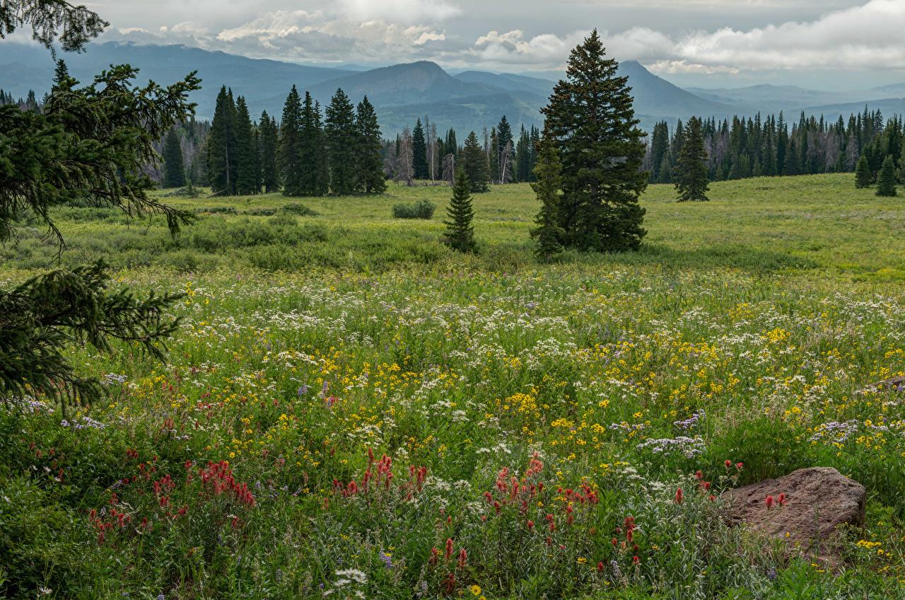 Картинка США Colorado Ель Природа Поля Трава штаты