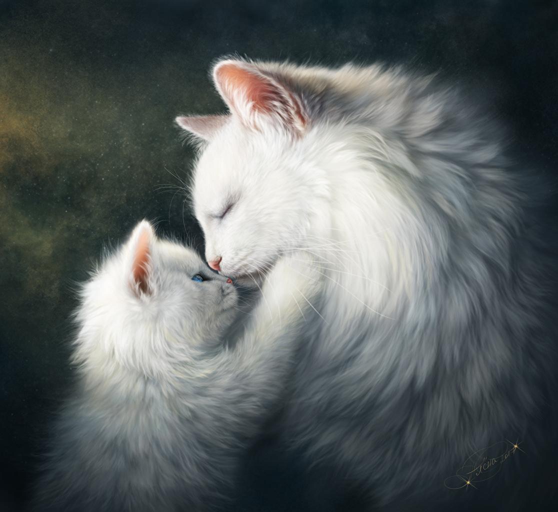 Картинки коты на телефон
