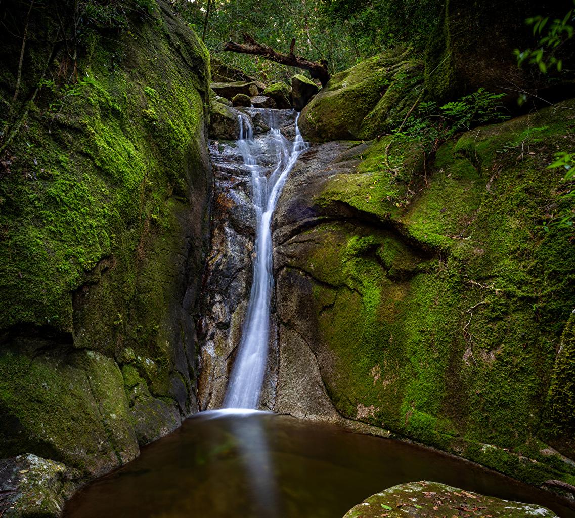 Фото Австралия Paluma National Park Queensland Ручей скале Природа Водопады парк Мох Утес скалы Скала ручеек Парки мха мхом