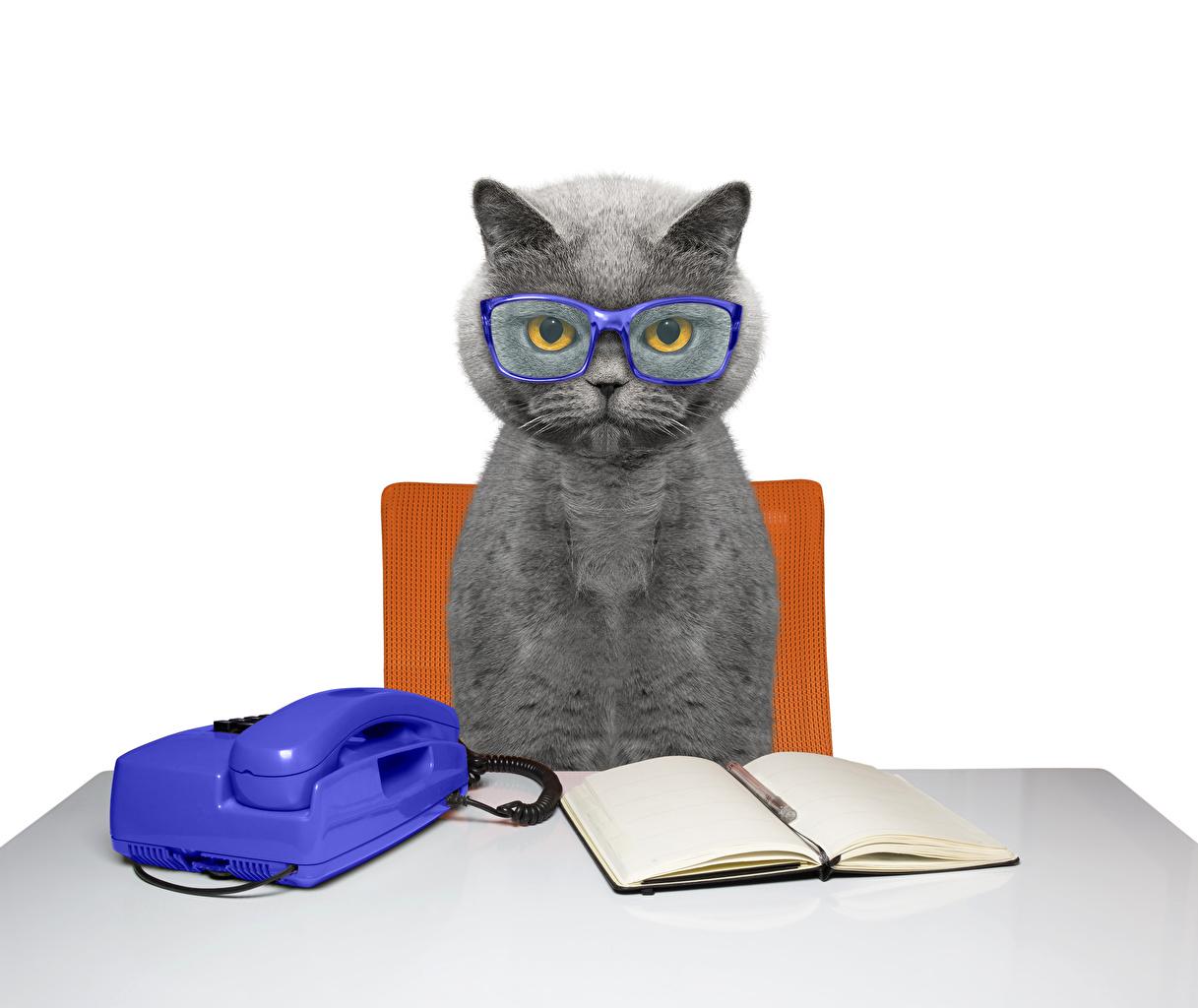 Фотографии Кошки Тетрадь Телефон Очки Стол Животные Коты