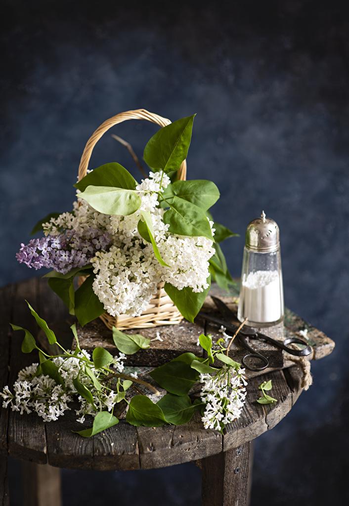Обои для рабочего стола Сирень цветок Корзина на ветке  для мобильного телефона Цветы корзины Корзинка ветвь ветка Ветки
