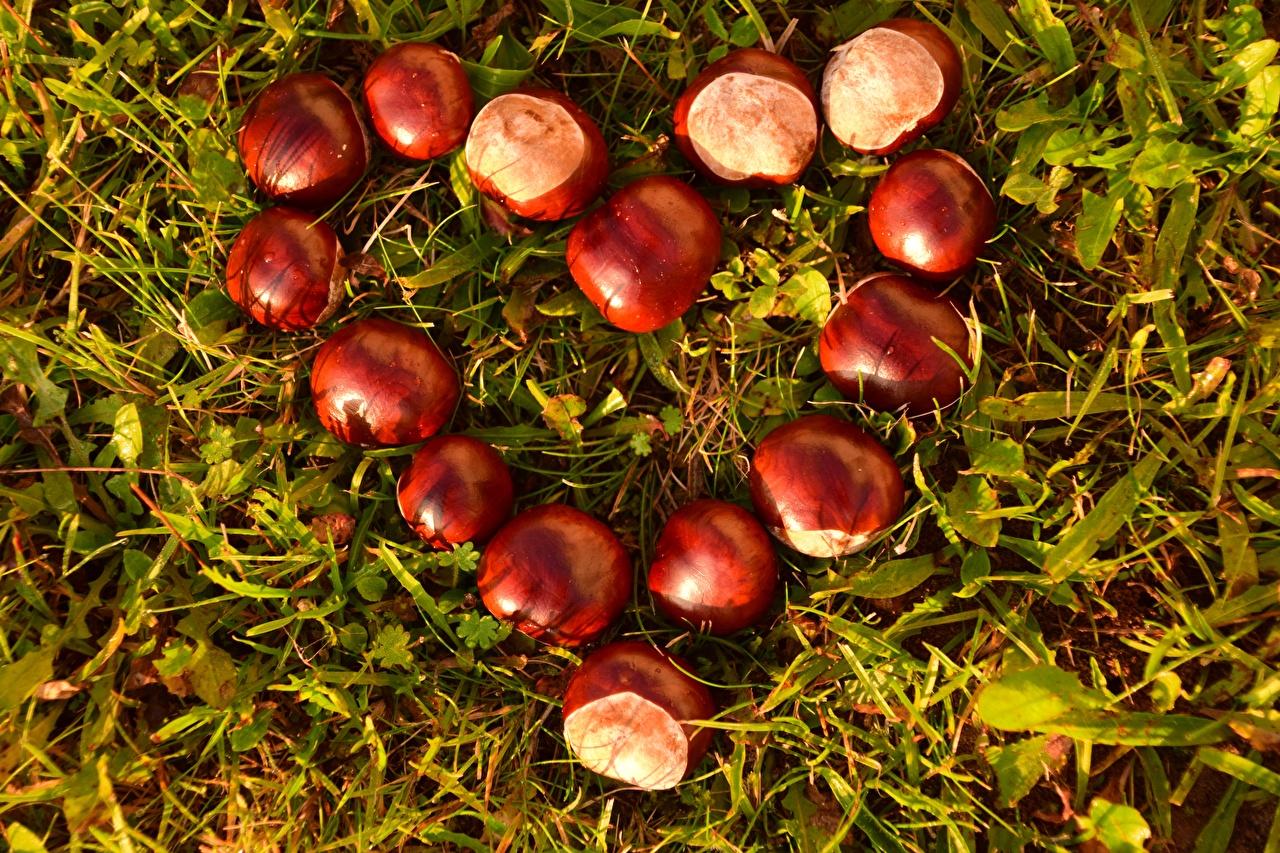 Картинка Каштан сердца траве Крупным планом серце Сердце сердечко Трава вблизи