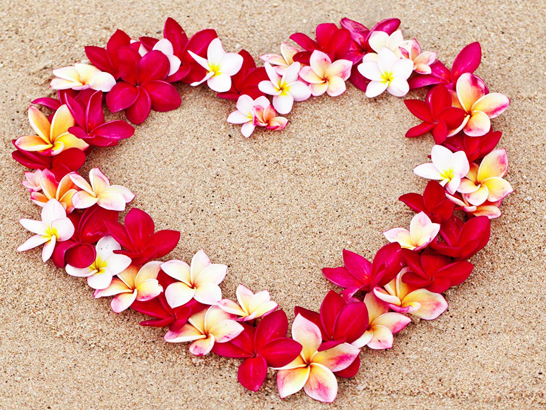 Картинка День всех влюблённых сердечко Цветы Песок Плюмерия Дизайн День святого Валентина Сердце