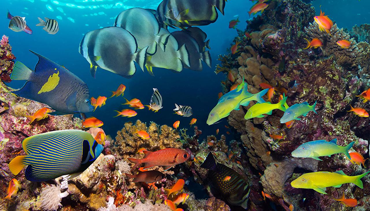 Фотографии Рыбы Подводный мир Кораллы животное Животные