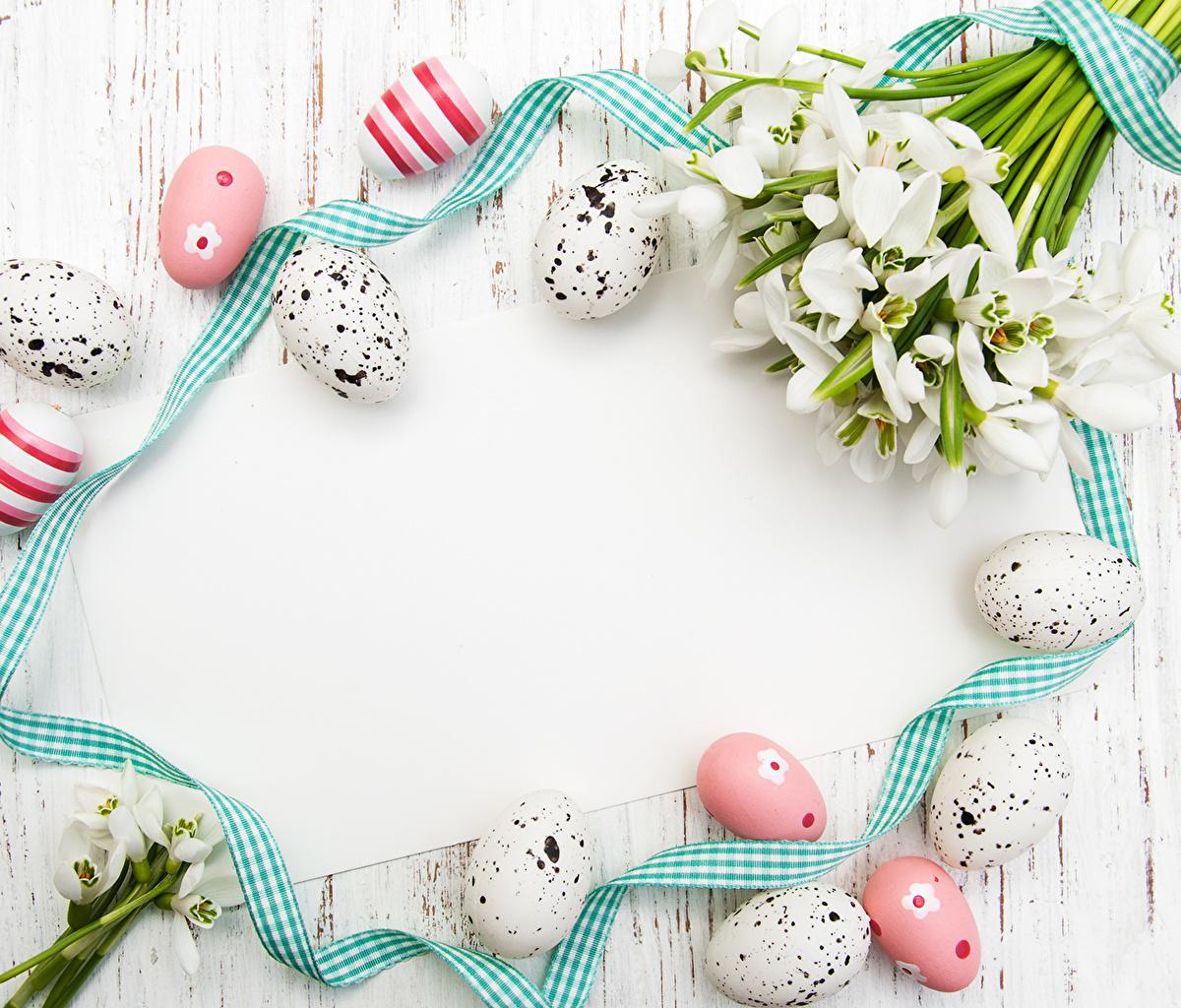 Обои для рабочего стола Пасха яйцами цветок Подснежники Лента Праздники яиц яйцо Яйца Цветы Галантус ленточка