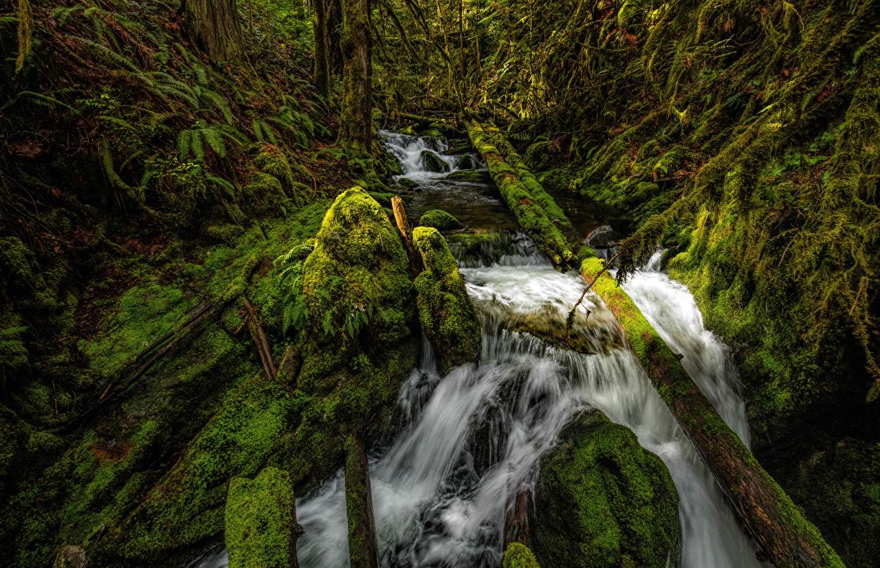 Фото Канада Shawnigan Lake HDRI бревно Природа Водопады мха HDR Бревна Мох мхом