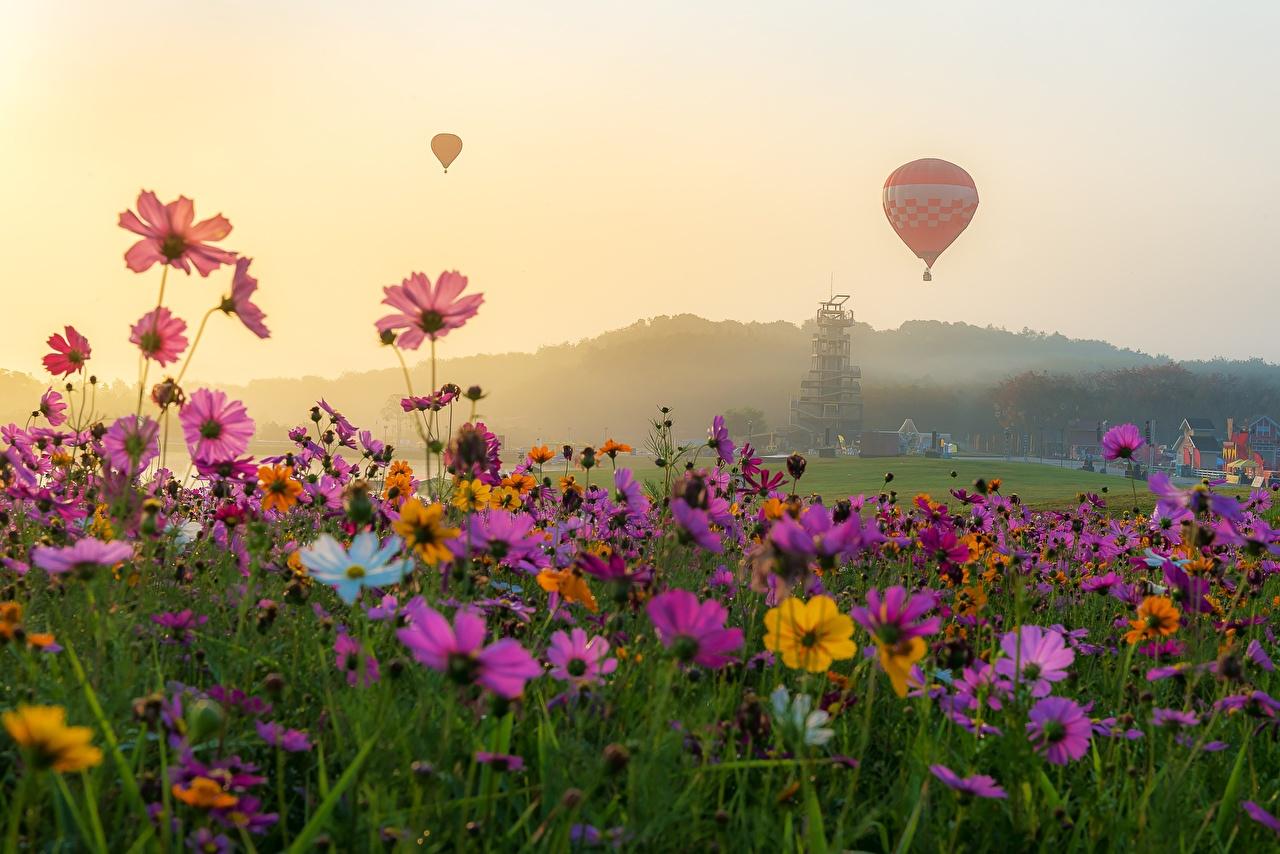 Картинка Воздушный шар Луга Космея цветок аэростат Цветы