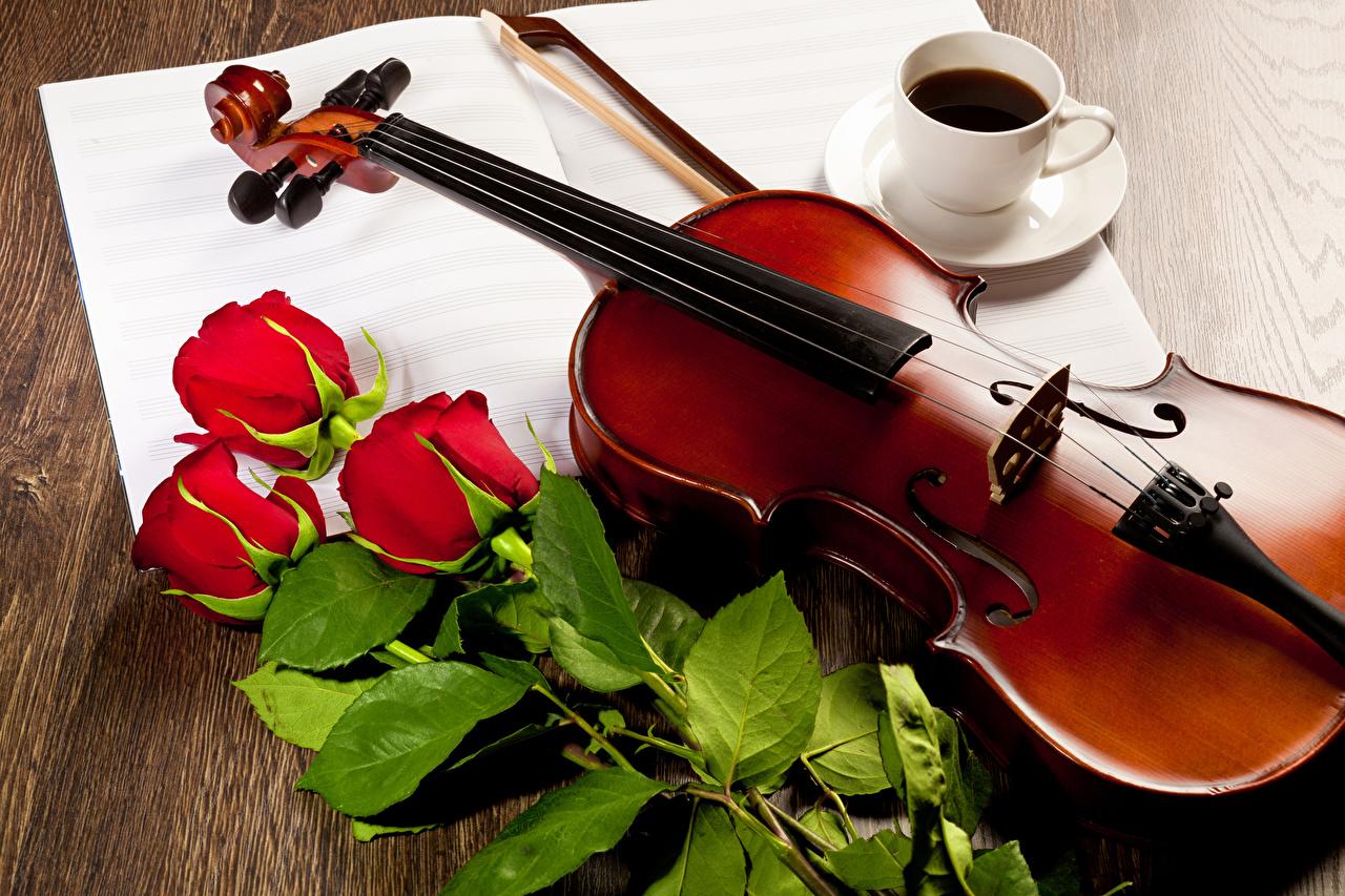 Фотография Скрипки Кофе Розы Красный Цветы Чашка Натюрморт роза красных красная красные цветок чашке