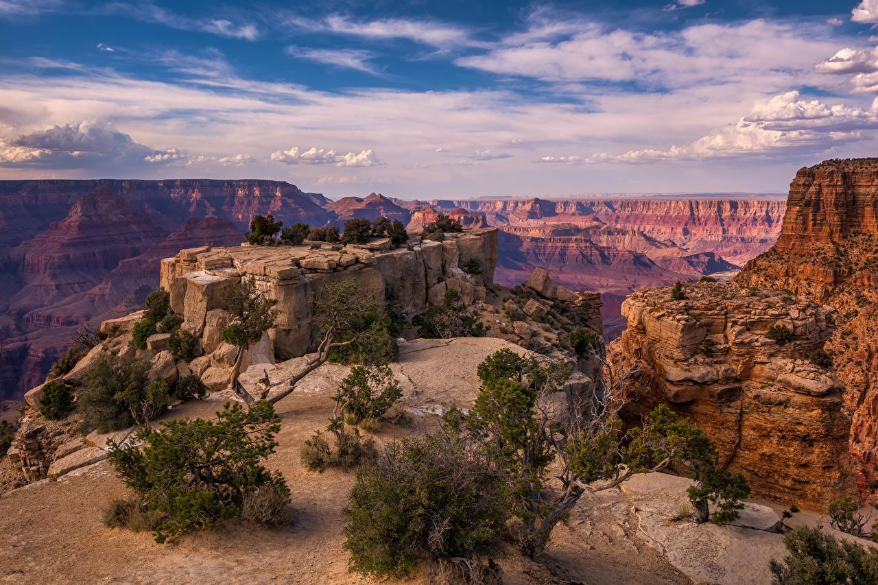 Фото Гранд-Каньон парк америка Arizona скалы Каньон Природа Парки дерева облако США штаты Утес скале Скала каньона каньоны парк дерево Облака Деревья облачно деревьев