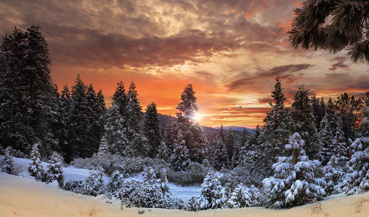 Фотографии Йосемити Канада Ель Зима Природа лес Небо парк Снег рассвет и закат ели зимние Леса снегу снега Парки снеге Рассветы и закаты