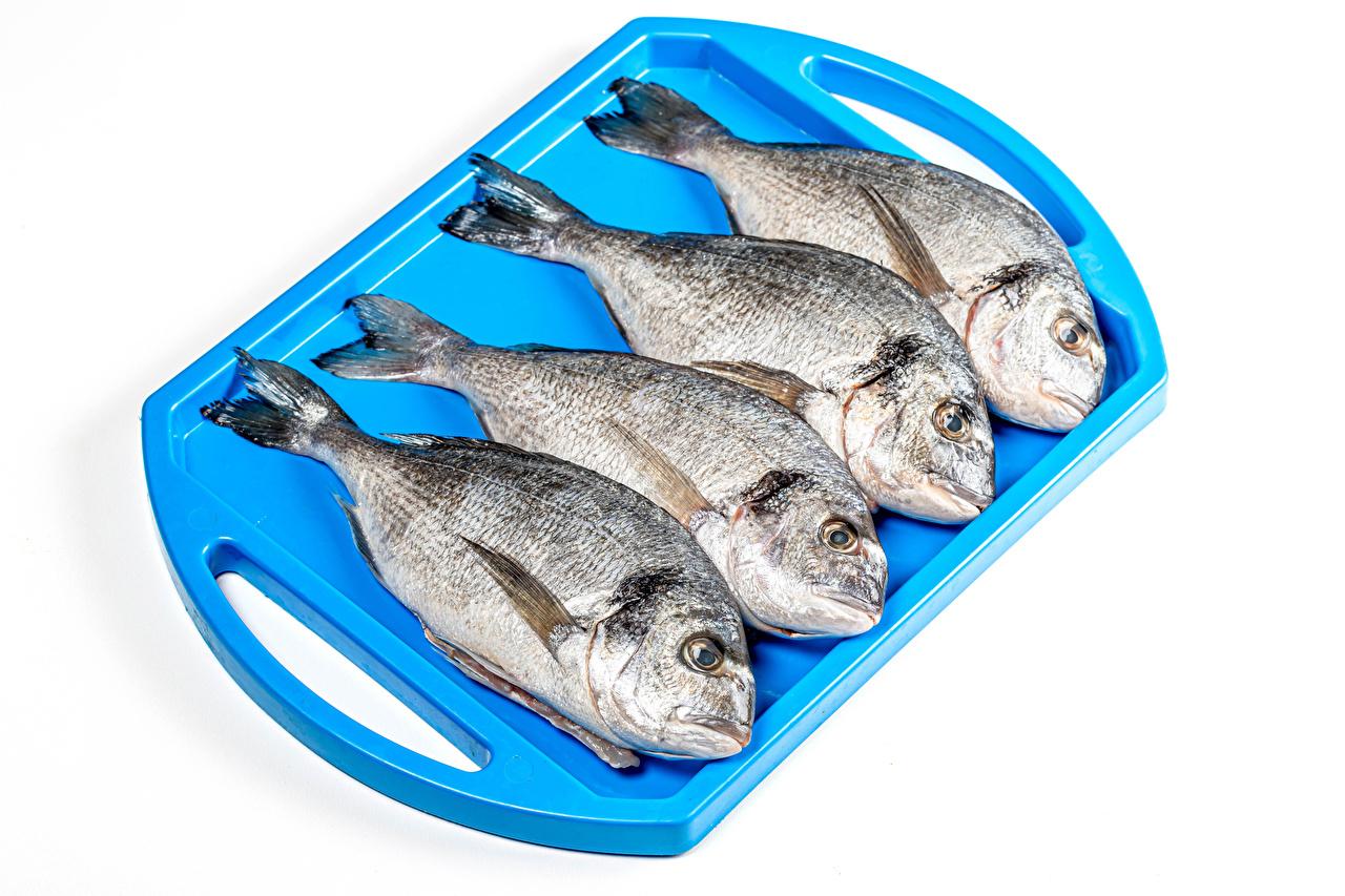 Картинка Рыба Пища Белый фон Еда Продукты питания белом фоне белым фоном