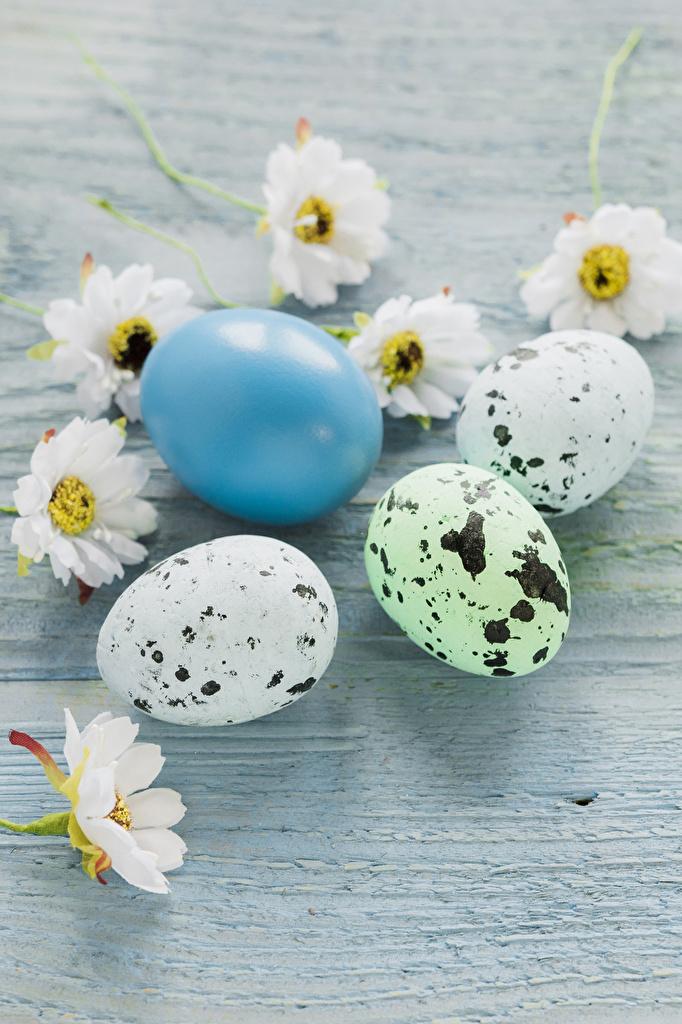 Картинка Пасха яйцо Хризантемы Праздники Доски  для мобильного телефона яиц Яйца яйцами