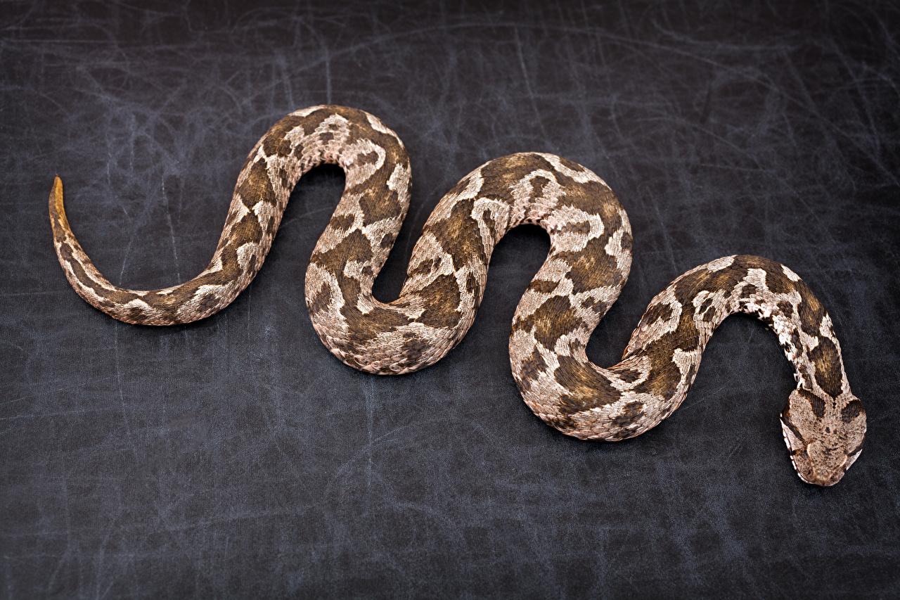 Картинка Змеи животное Животные