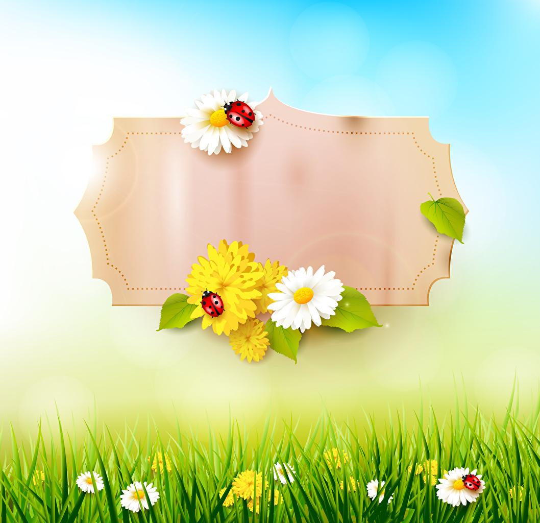 Картинки Божьи коровки Весна Природа Ромашки Трава Шаблон поздравительной открытки весенние траве