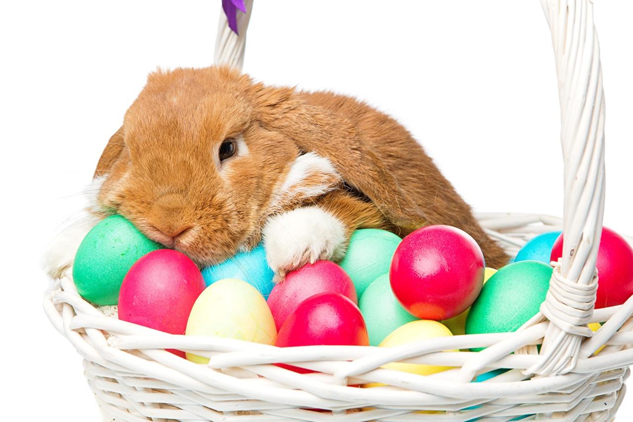 Фото Пасха Кролики яйцами Корзинка Животные кролик яиц яйцо Яйца Корзина корзины животное