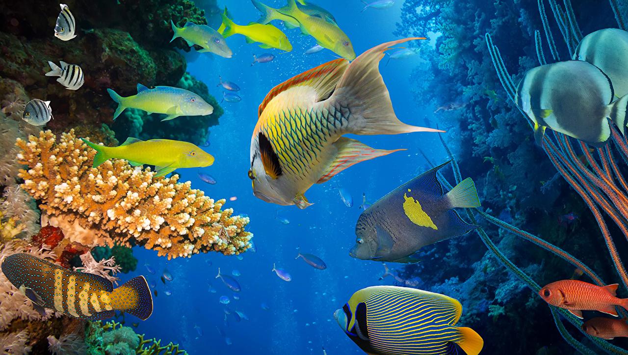 Фотография Рыбы Подводный мир Кораллы животное Животные